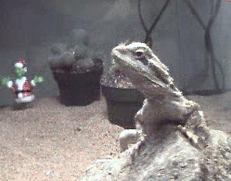 dragon2001.jpg